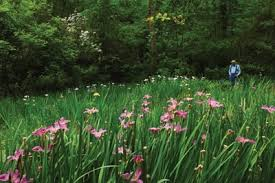 Briarwood Nature Preserve: A Hidden Gem in Natchitoches Parish